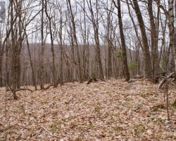 Property for Sale on 0 Sunnyside Street, Haliburton