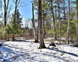 Property for Sale on 00 Highway 36 Rd, Kawartha Lakes